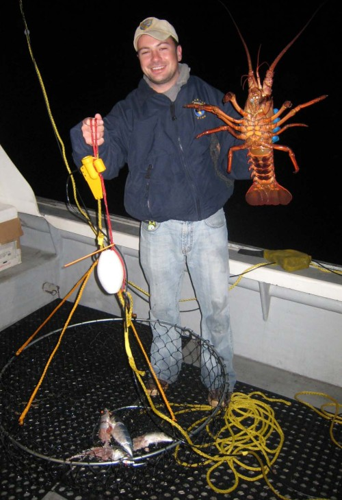 DFG Marine Biologist Travis Buck holds a California spiny lobster caught in a traditional hoop net (DFG photo)