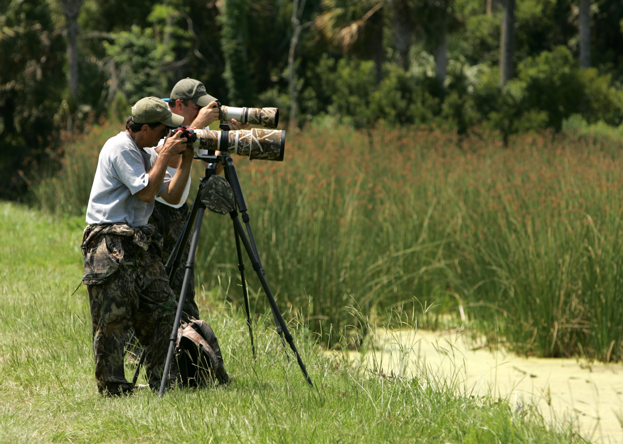 Is Pursuing Wildlife For A Photo A Form Of Take