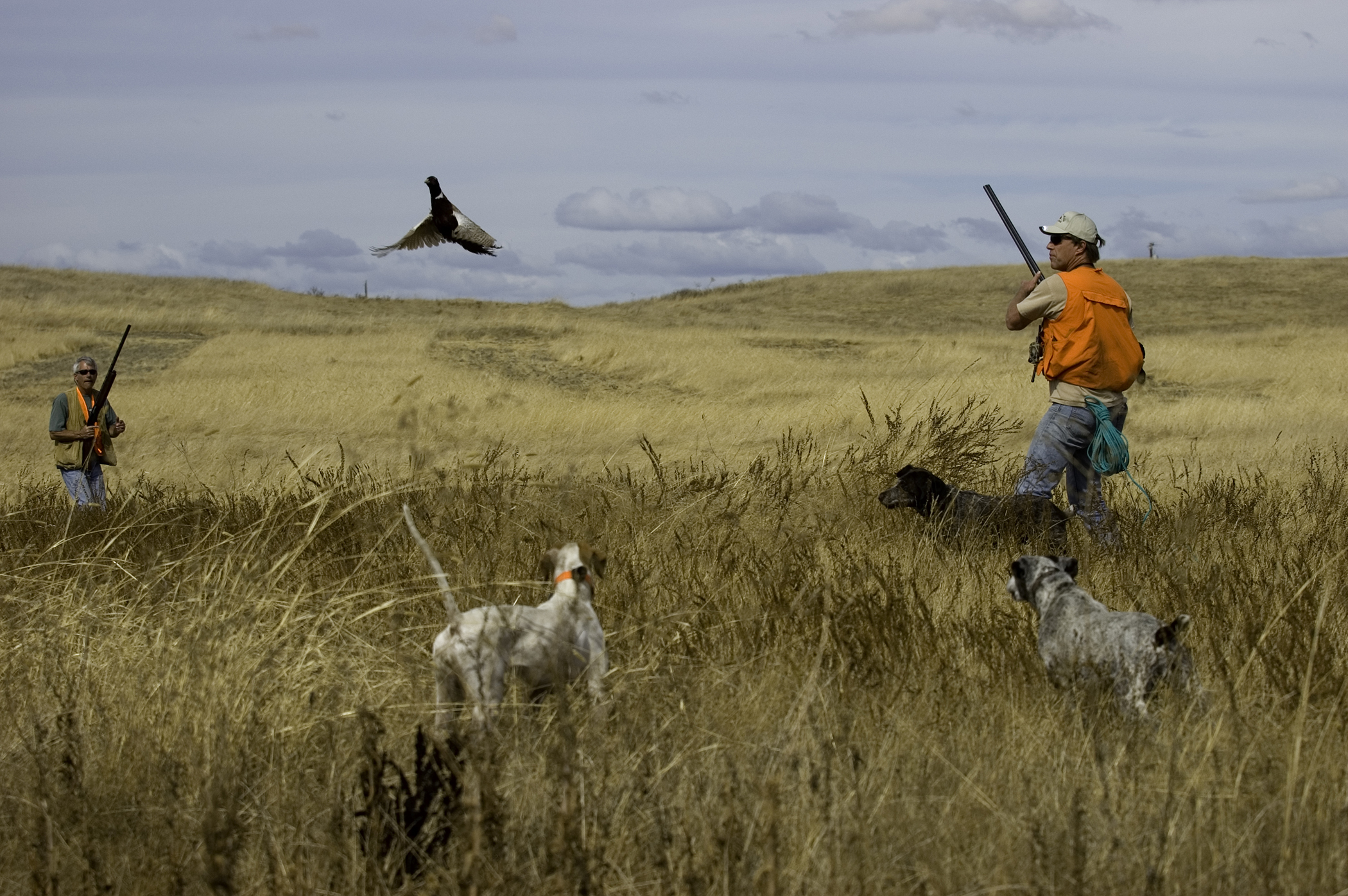 How To Train A Dog To Bird Hunt