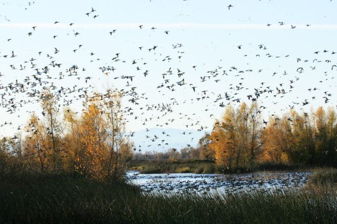 Gray Lodge Wildlife Area (Photo by Carrie Wilson)