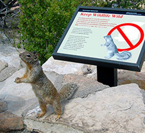 Feeding wildlife can do more harm than good (NPS photo)