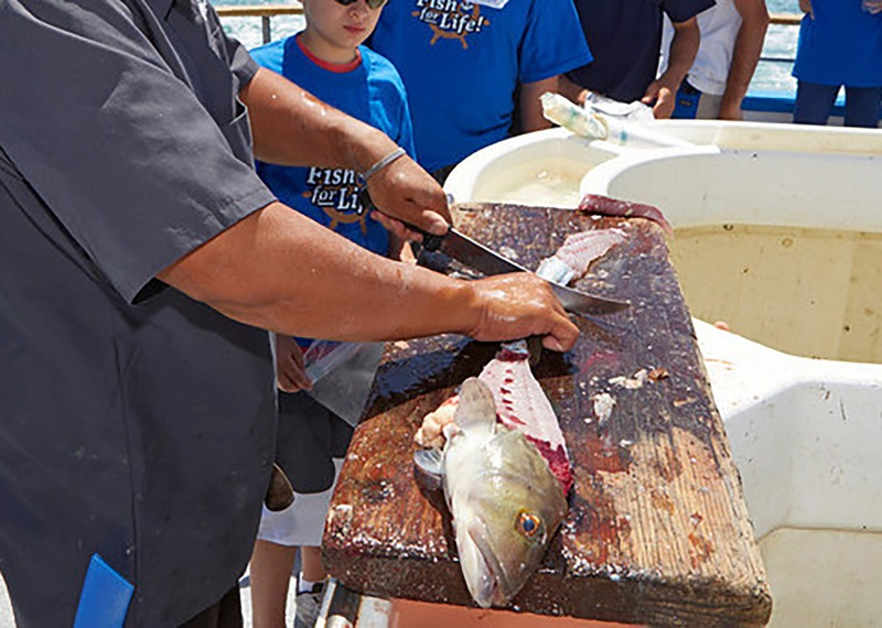 Only certain ocean fish are allowed to be filleted at sea. Check section 27.65 (c) in the Ocean Fishing Regulations booklet