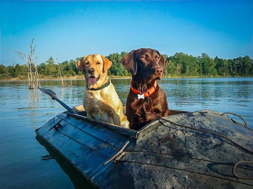 (Photo courtesy of David A. Jones, Ducks Unlimited)