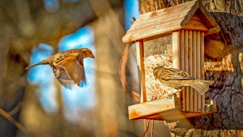 Wild bird feeders often lure in more than just the intended birds (Creative Commons photo)