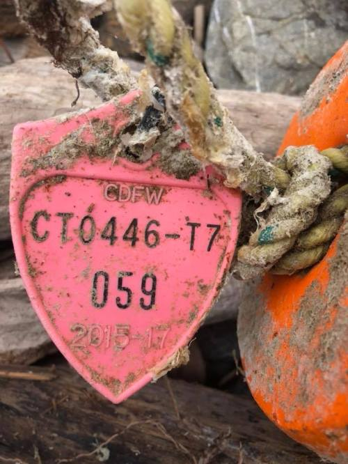 crab buoy tag